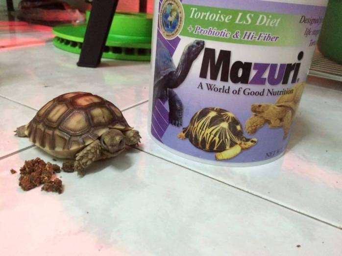 อาหารเต่า อาหารเต่าบก มาซูริ mazuri