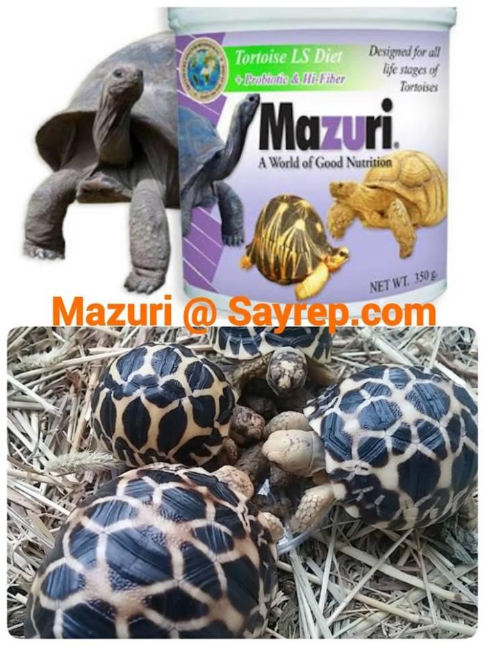 อาหารเต่าบก อาหารเต่า มาซูริ MAZURI